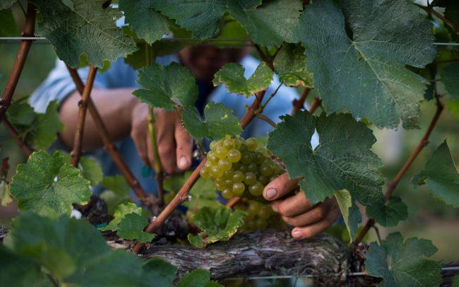 King Family Vineyards Crozet Virginia