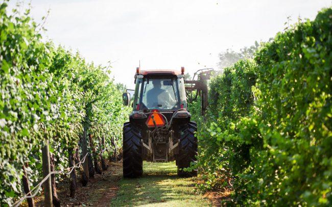 Vineyard Tractor Hedging at King Family Vineyards